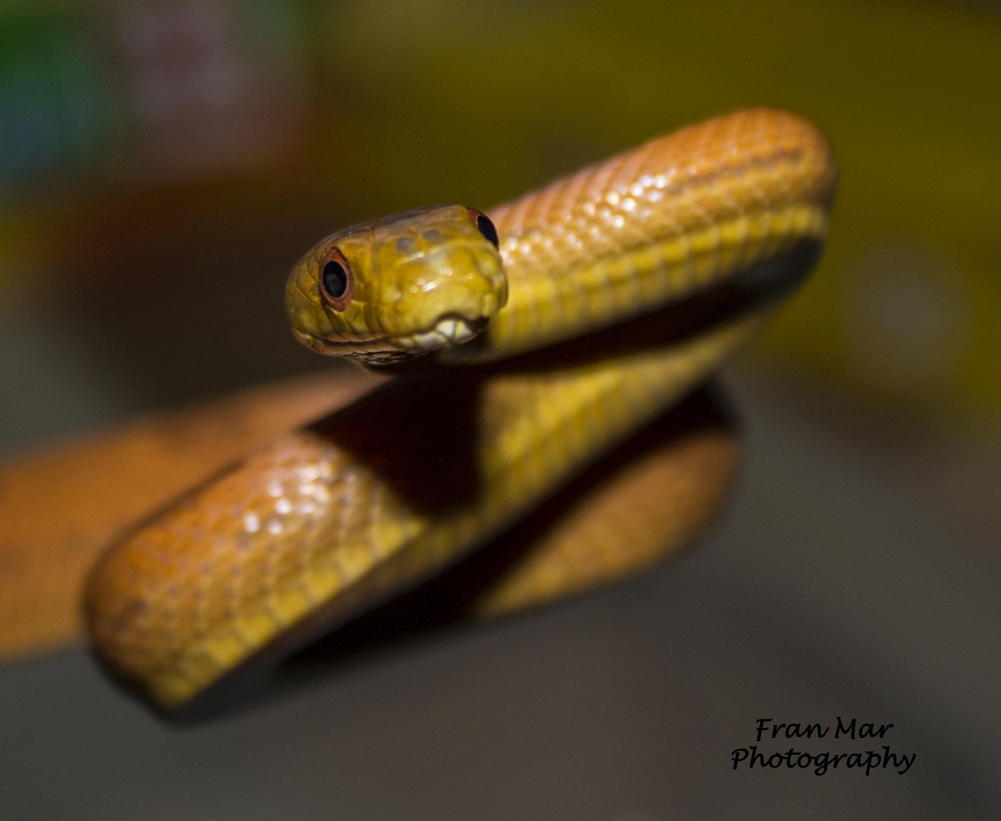 new bob snakes 011